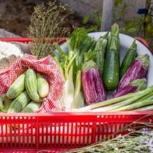 סל פירות וירקות מהחקלאי